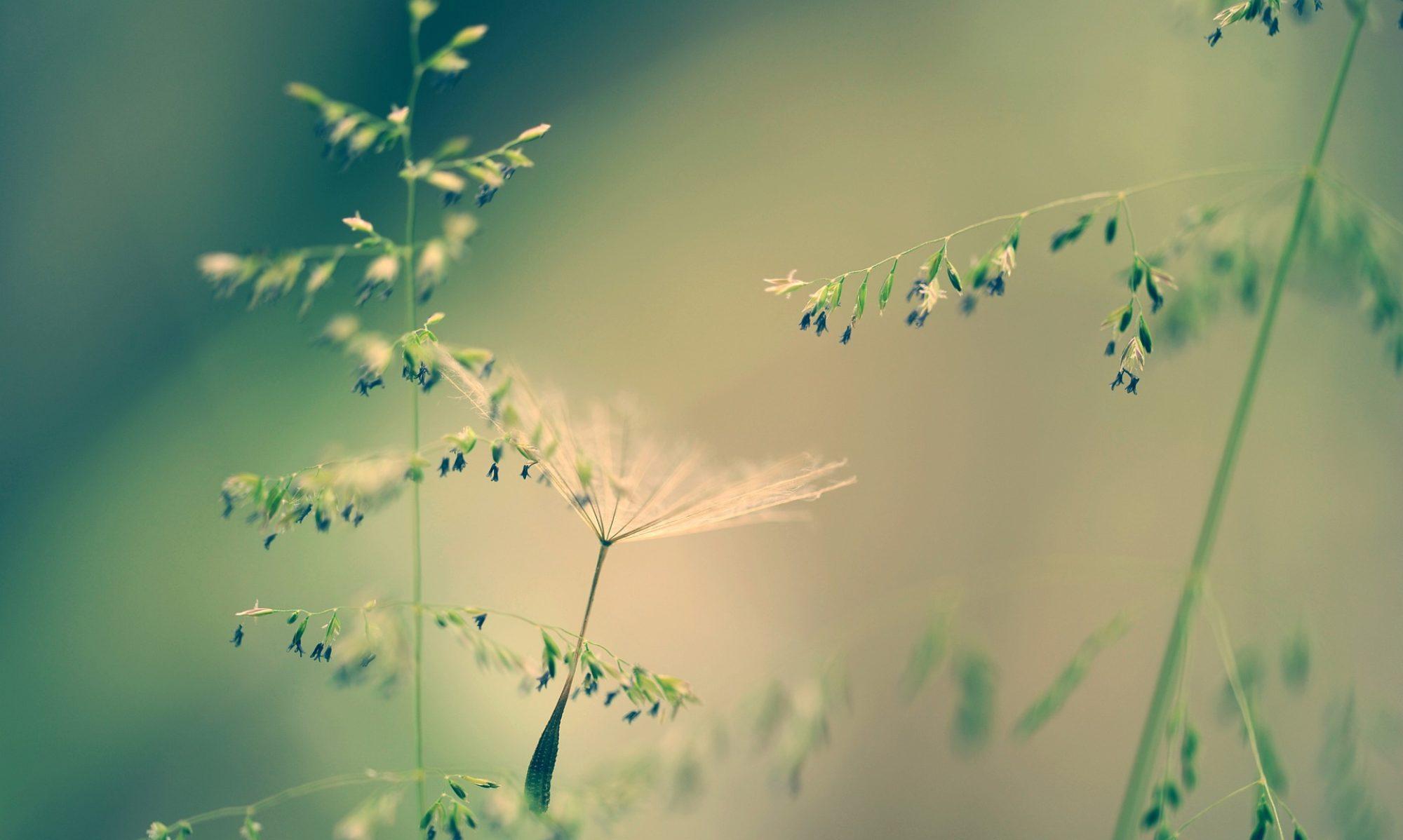 Achtsamkeit - für ein gesundes, energievolles und erfolgreiches Leben